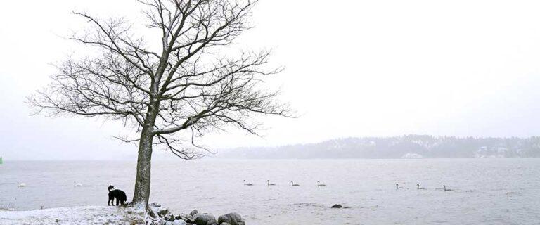 Återställare med abstinens om vintern